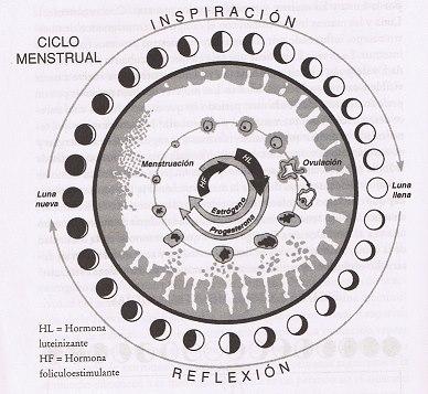 ciclo menstrual 1