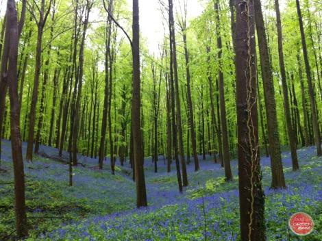 bosque y naturaleza
