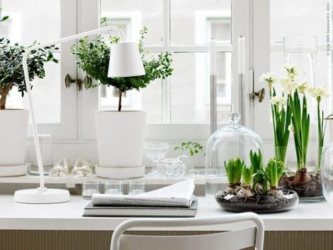 office-plants-2
