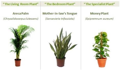 Plantas. Purificadoras del aire