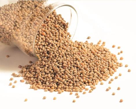 Granos de sorgo o sorghum. Foto de la web cleopatraherbs.com
