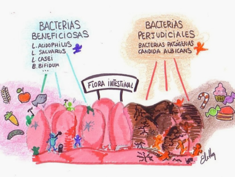 bacterias intestinales